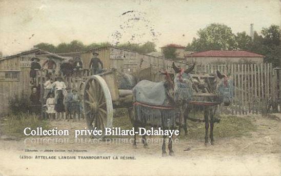 ATTELAGE TRANSPORTANT DE LA RESINE - LACANAU - MEDOC (Gironde).
