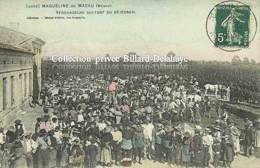 4029-LES VENDANGEURS DE LA MAQUELINE de MACAU (Médoc).Vers 1900.