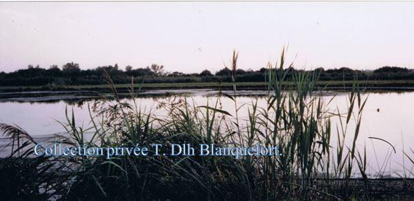 Marais PERRIN vue du BLANC où se posent les migrateurs .